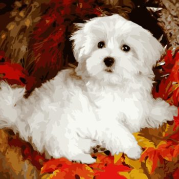 White Puppy DIY Painting by Numbers