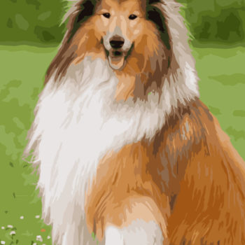 Shetland Sheepdog DIY Painting by Numbers