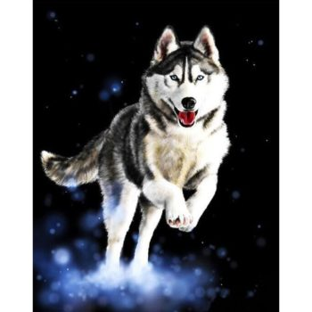 Husky Running DIY Painting By Numbers